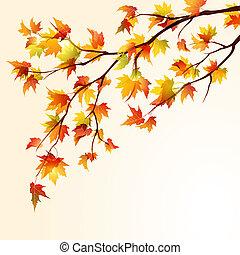 otoño, arce, rama