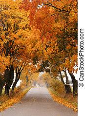otoño, arce, road.
