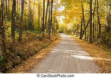 otoño, bobina, bosque, por, trayectoria