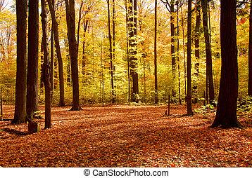 otoño, bosque, paisaje