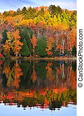 otoño, bosque, reflexiones