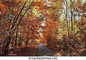 otoño, callejón