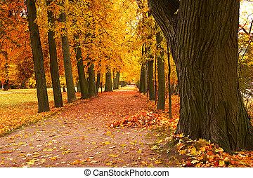 otoño, callejón, en el estacionamiento