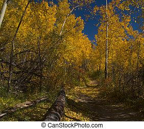 otoño, caminata