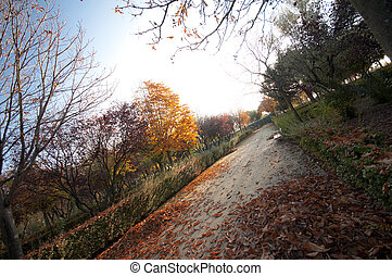 otoño, camino, plano de fondo