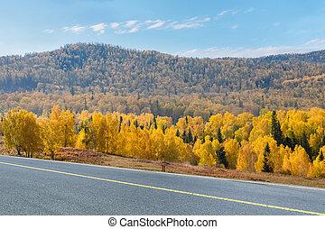 otoño, caminos, bosque boreal