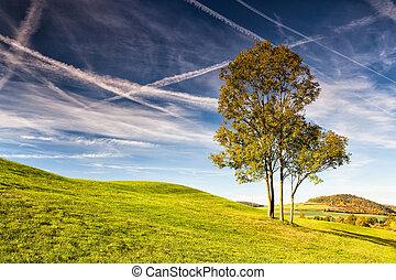 otoño, campo de golf