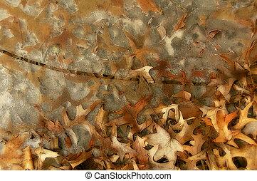 otoño, charca