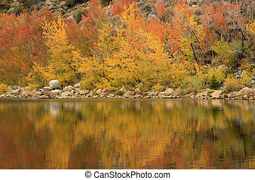 otoño colora, en, el, sierra, montañas, california