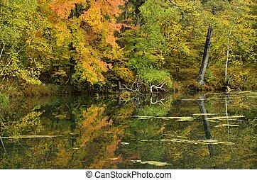 otoño colora, reflejado, en, un, lago