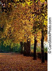 otoño colora