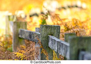 otoño, colores, cerca, otoño