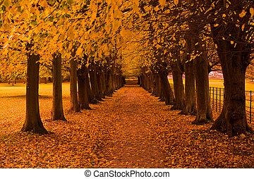 otoño, colores, en, el, bosque