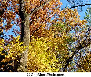 otoño, colores