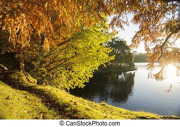 otoño, colores, mirar completamente, el