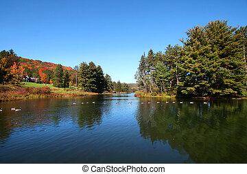 otoño, en, allegheny, bosque