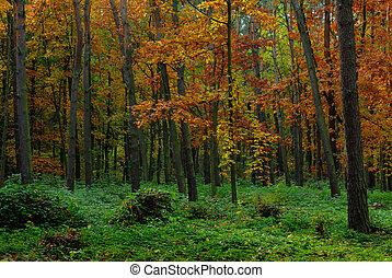 otoño, en, bosque