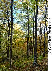 otoño, en, el, bosque