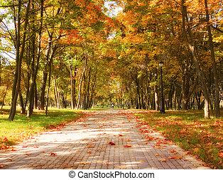 otoño, en el parque