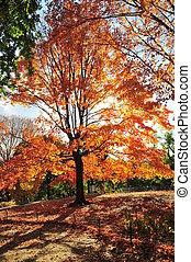 otoño, en, nueva york