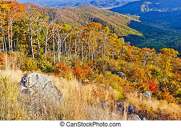 otoño, en, shenandoah parque nacional