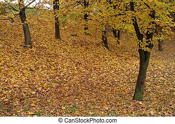 otoño, en, un, parque