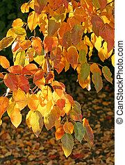 otoño, encendido, rama de árbol, luz del sol