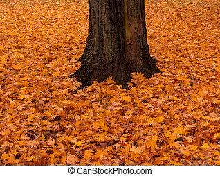 otoño, esplendor