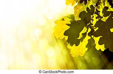 otoño, Extracto, arte, Plano de fondo