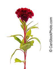 otoño, flor roja
