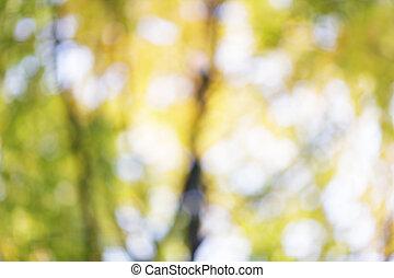 otoño, foco, plano de fondo, afuera