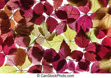 otoño, follaje