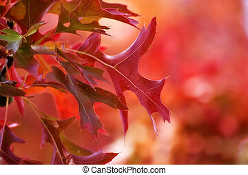 otoño, fondo rojo