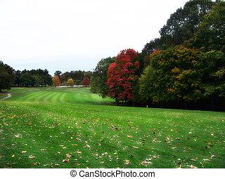 otoño, golf