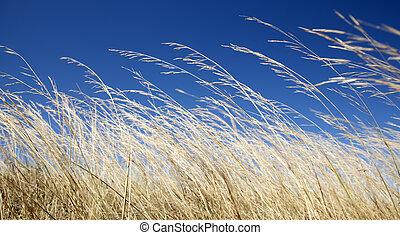 otoño, grass., amarillo