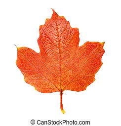 otoño, hoja, rojo