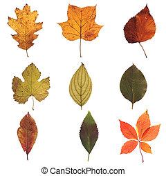otoño, hojas,  01, Colección