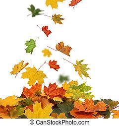 otoño, hojas, aislado