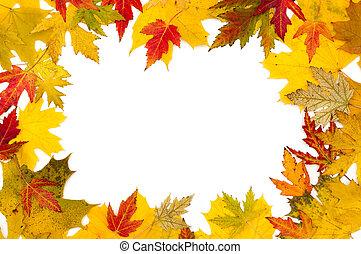 otoño, hojas, arce