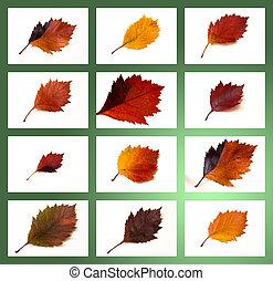 otoño, hojas, Colección