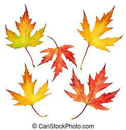 otoño, hojas, Conjunto
