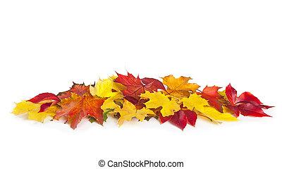 otoño, hojas, grupo, colorido