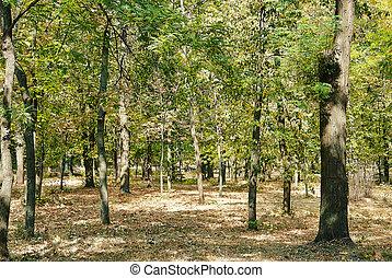 otoño, hojas, parque, Otoñal, árboles