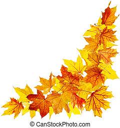 otoño, hojas