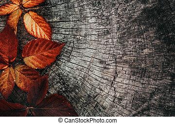 otoño, hojas, rojo