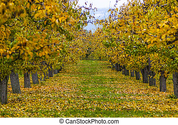 otoño, huerto