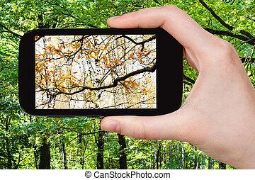 otoño, imagen, estaciones, cambio, verano