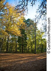 otoño, la tarde de moda, el, parque