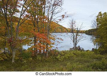 otoño, lago, vista