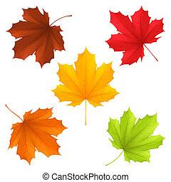 otoño, leaves.